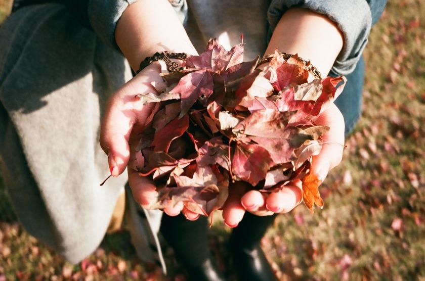 leaves-925118_1920