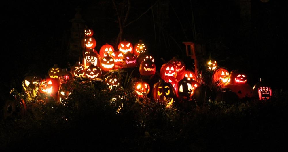 pumpkins-1586516_1920